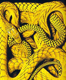 Detail van foto uit 'Venenum' van Guido Mocafico